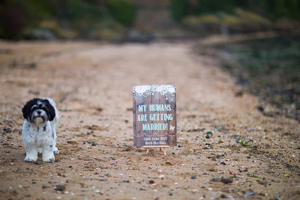 engagement photography dalgety bay - dog on the beach