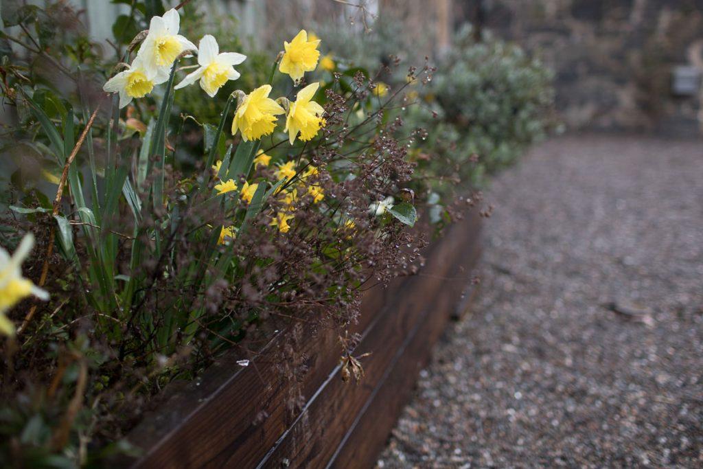comrie croft spring flowers
